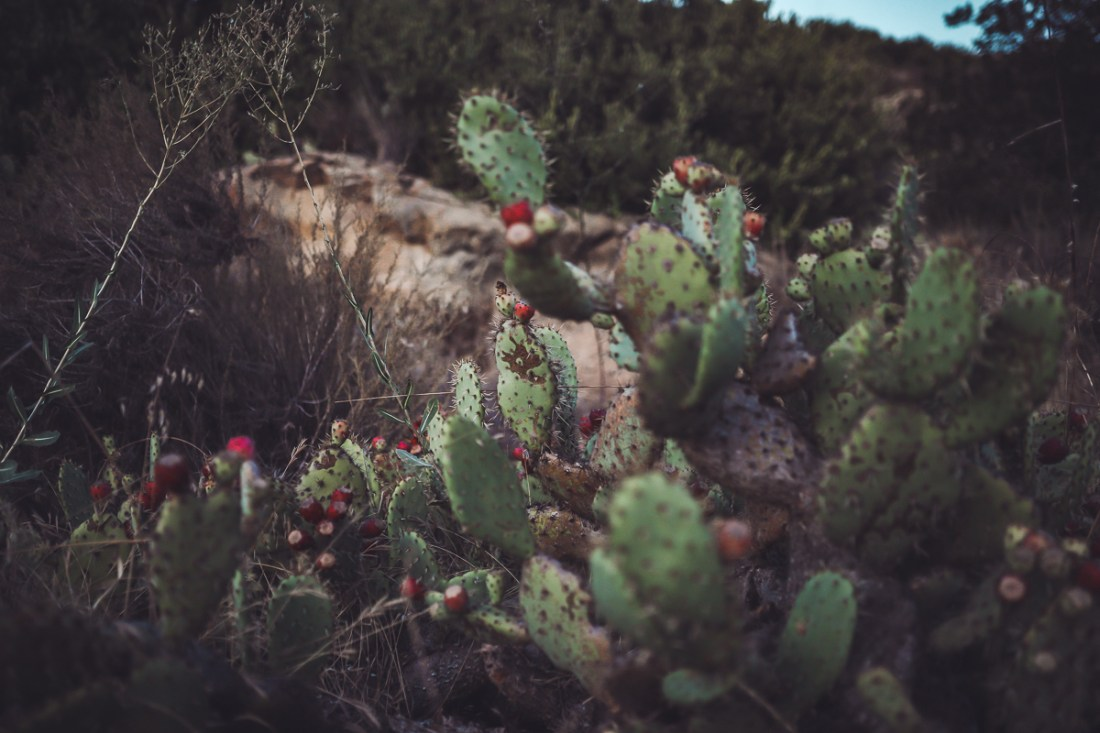 California Vacation Ideas for a Momcation in Orange County by popular Nashville travel blog, Modern Day Moguls: image of some cacti.