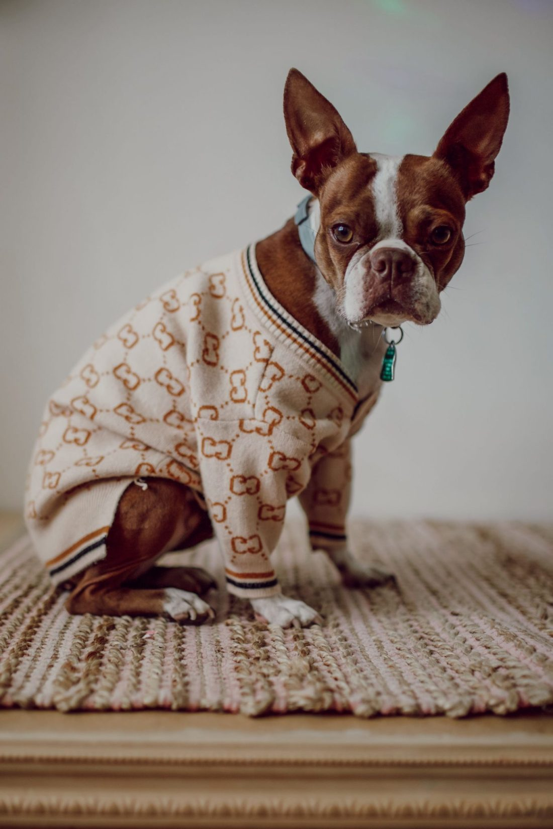 Homeschooling Journey by popular Nashville lifestyle blog, Modern Day Moguls: image of a french bulldog wearing a sweater.