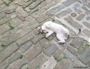 Day 208 - Euro kitty 1