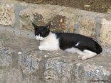 Day 208 - Euro kitty 7