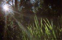 Day 245 - Sun beams on grass