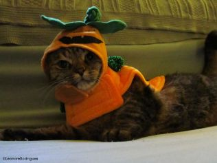 Day 304 - Mrs Parker pumpkin