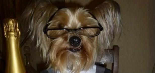 Celebrate Valentines Day Like An Animal Modern Dog Magazine