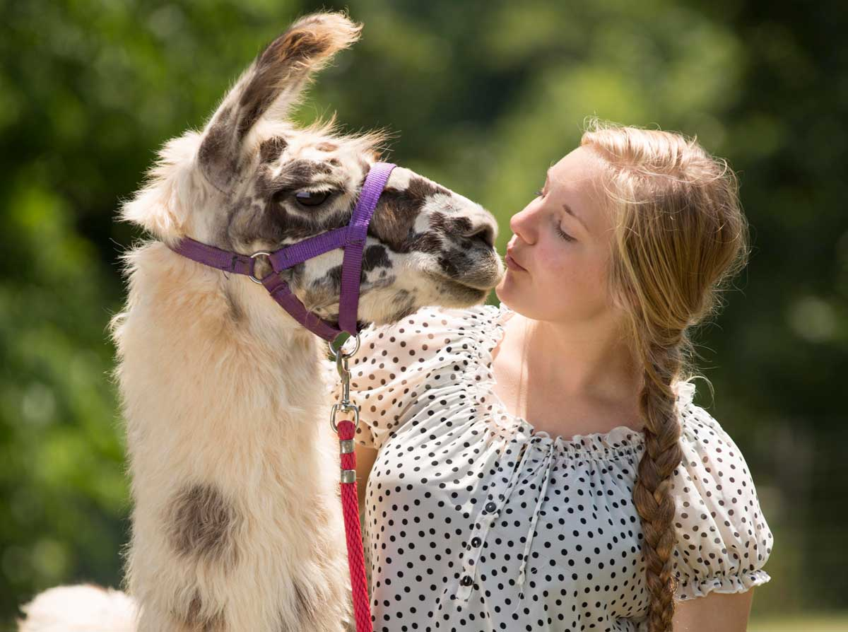 Upcoming Documentary Captures Our Quirky Llama Nation
