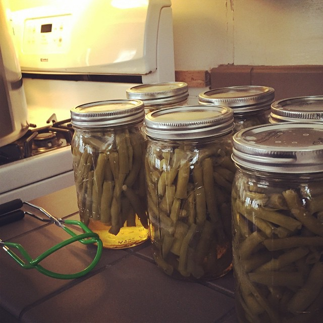 Green beans canning in glass mason jars