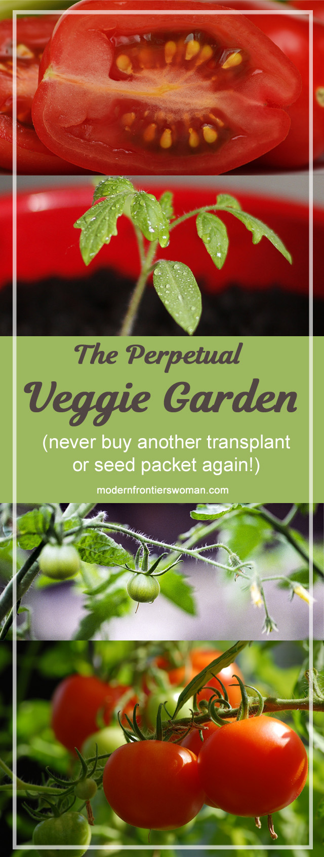 The perpetual veggie garden (never buy another transplant or seed packet again!)