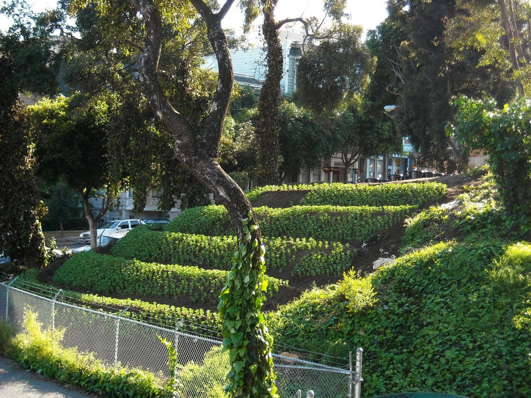 Terraced planting on steep slope