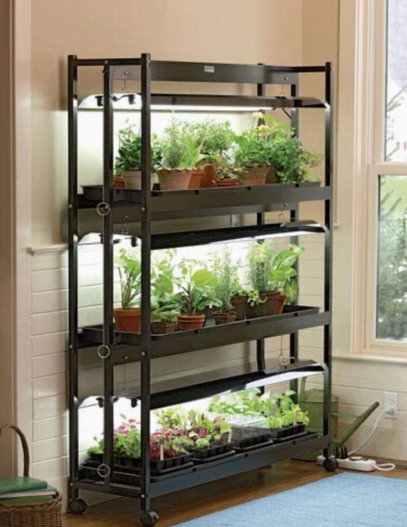 Grow lights of tiered shelf