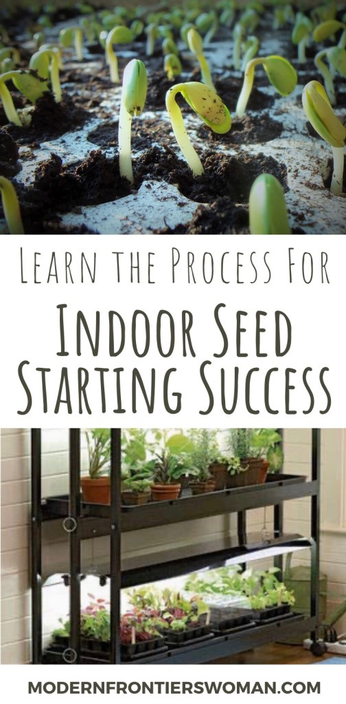 Learn the process for indoor seed starting success