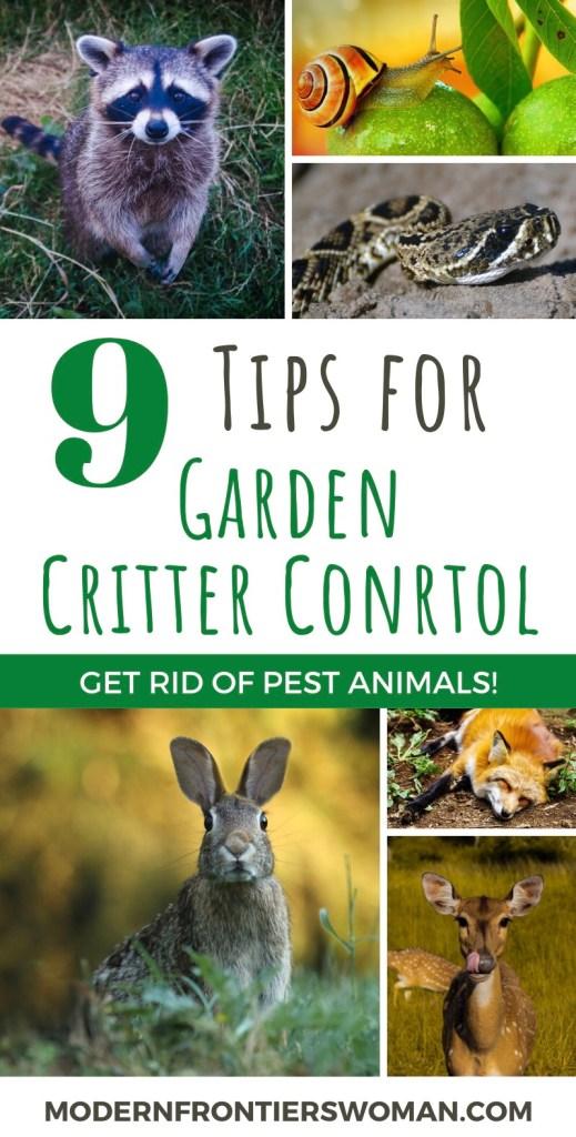 9 tips for Garden Critter Control