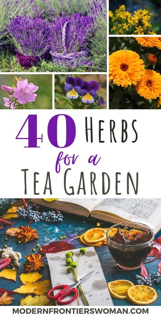 40 Herbs for a Tea Garden