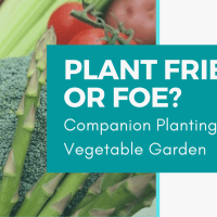 Plant Friend or Foe: Companion Planting in the Vegetable Garden