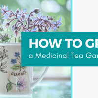 How to Grow a Medicinal Tea Garden (Plus over 40 Plants!)
