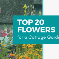 Top 20 Flowers for a Cottage Garden