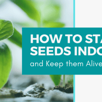 How to Start Seeds Indoors and Keep Them Alive!