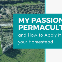 My Passion for Permaculture (and how to apply it to your homestead)!