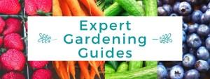 Expert Gardening Guides