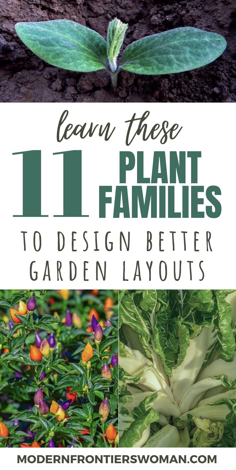Learn These 11 Plant Families to Design Better Garden Layouts
