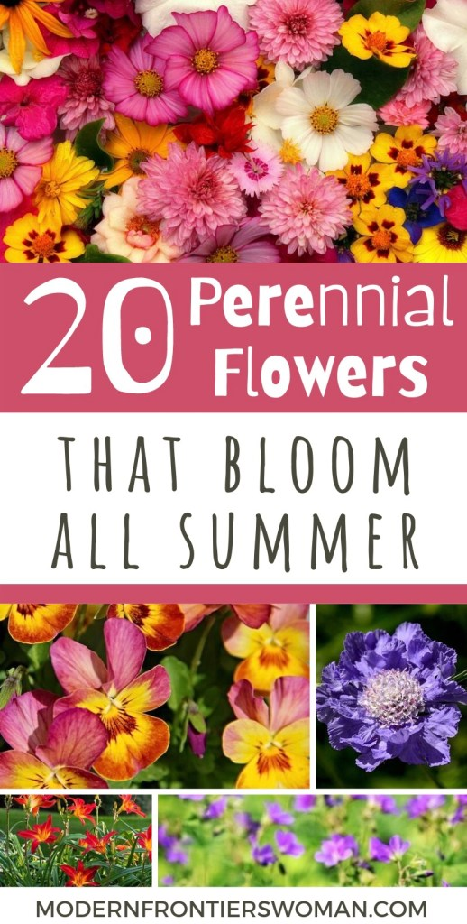 20 Perennial Flowers that Bloom all Summer