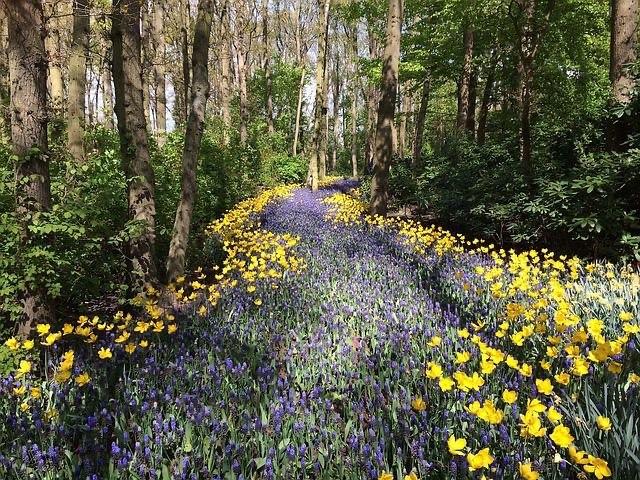 Wildflower Forest Path