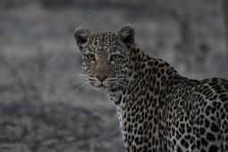 Botswana, Emblas