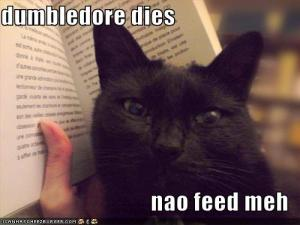 funny-pictures-cat-spoils-your-book