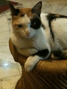 cats-pets-Pepo