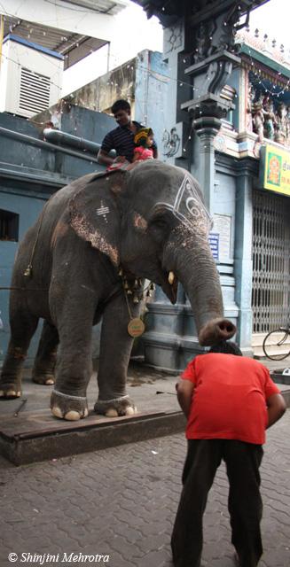 Pondicherry_Ganesh_temple_elpehant_blessing