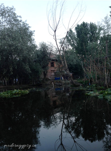 People live on the Dal lake and grow vegetables in floating gardens