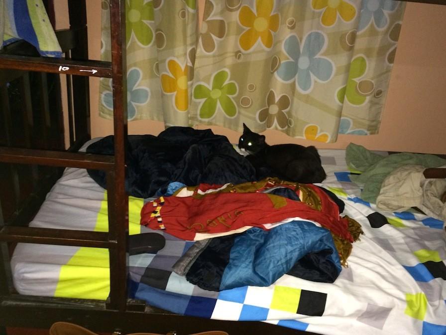 Tiere im Hostel