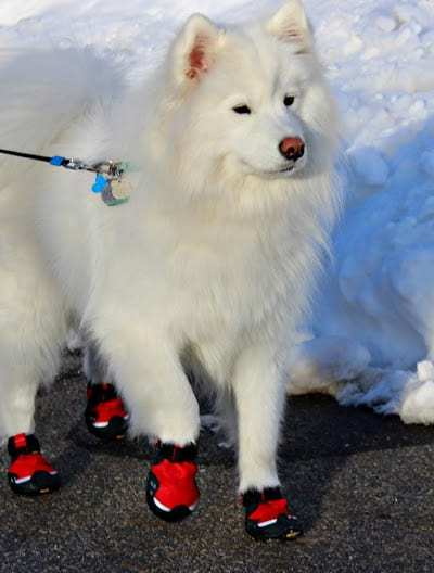 Ruff Wear Booties