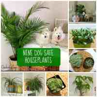8 Dog Safe Plants for a Stylish Home