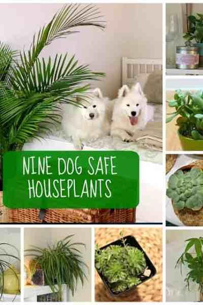 9 Dog Safe Houseplants