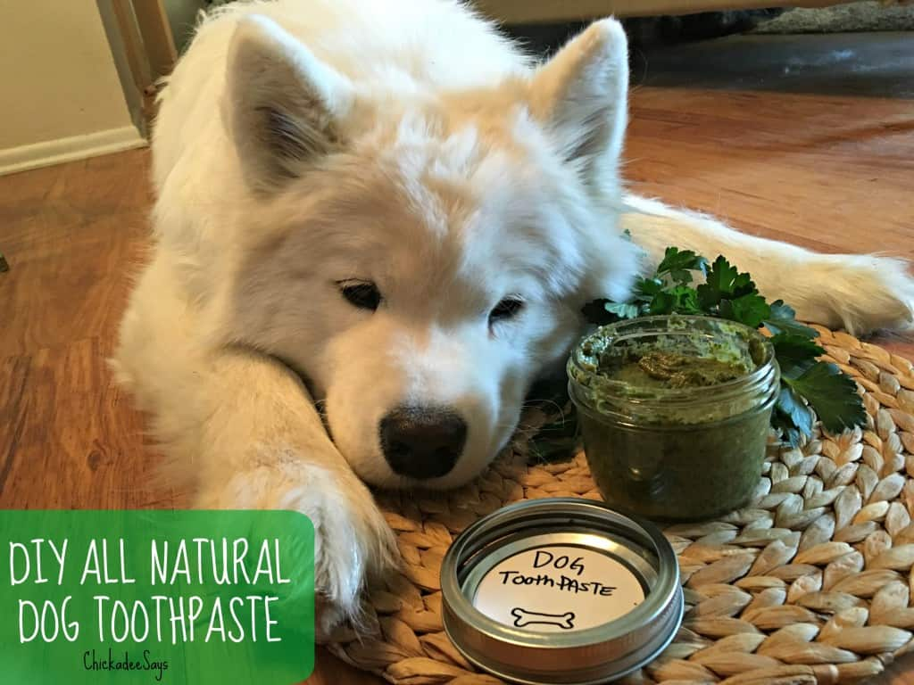 DIY All Natural Dog Toothpaste TEXT