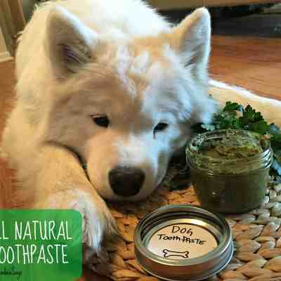 DIY All Natural Dog Toothpaste Recipe