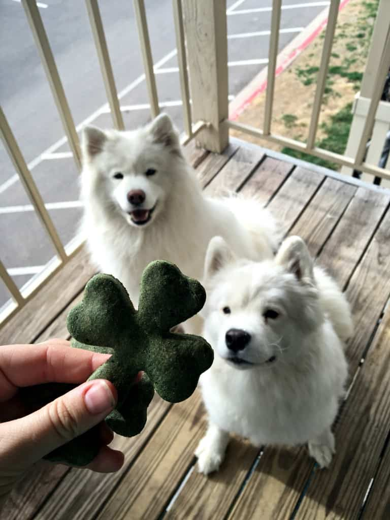 St Patrick's Day Dog Treats Recipe Tink and Meek