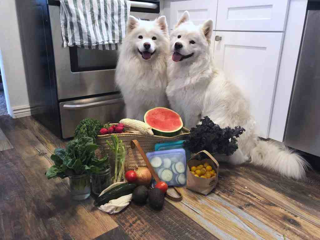 Dog Safe Summer Produce