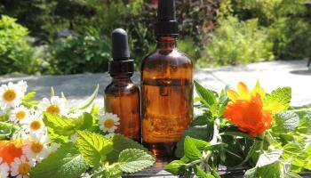 How to Make an Oregano Tincture — Modern Hippie Health & Wellness Inc