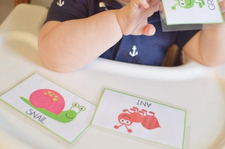 Bug Theme Toddler Flashcards
