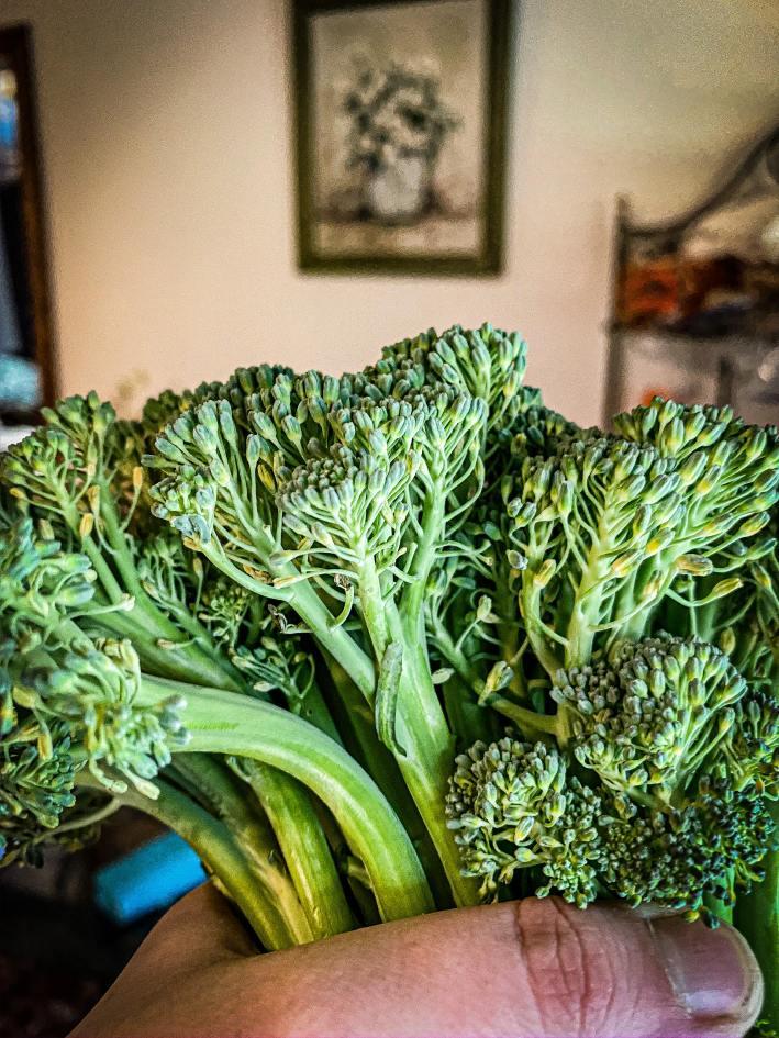 Harvesting Broccoli Guide: Harvested Broccoli Florets