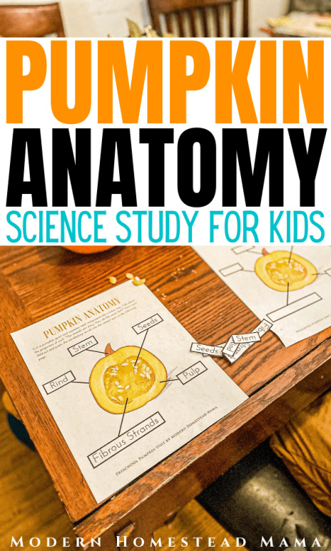 Pumpkin Anatomy Science Study for Preschoolers | Modern Homestead Mama