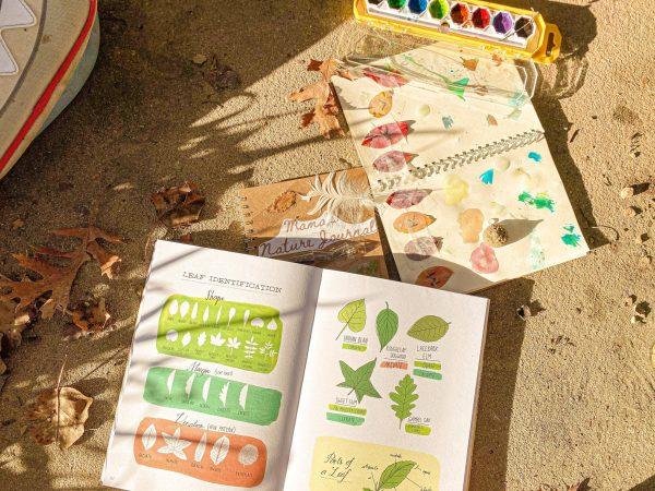 Autumn Nature Journal Study