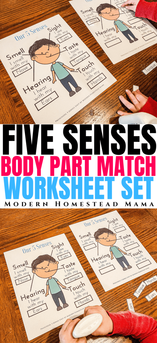 Five Senses Body Parts Match Activity + Printable Worksheet Set | Modern Homestead Mama