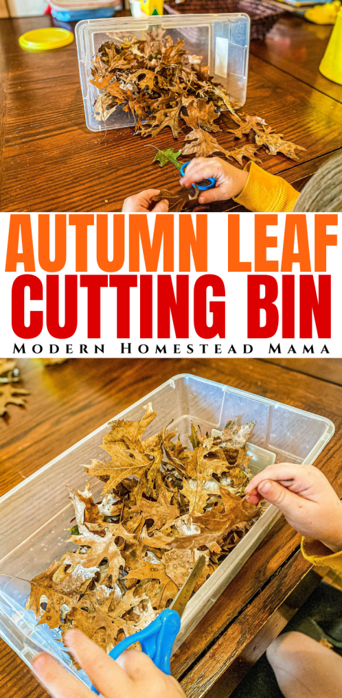 Leaf Cutting Bin for Preschoolers | Modern Homestead Mama