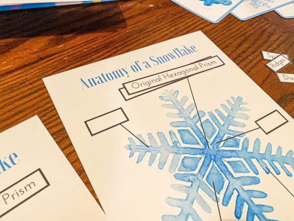Snowflake Anatomy