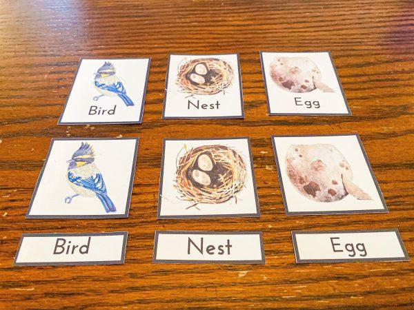Bird 3-Part Cards