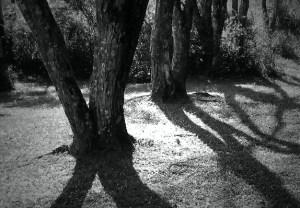 TreeShadow
