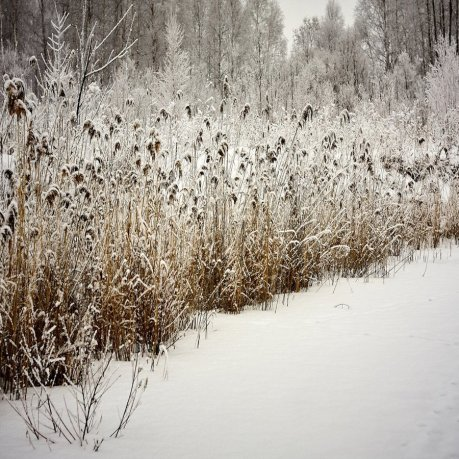 seed_heads_for_winter_900x900.jpg