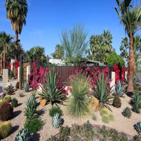 spectacular-water-conservation-gardening-with-cactus-and-succulents-000064591909_large_900x900.jpg