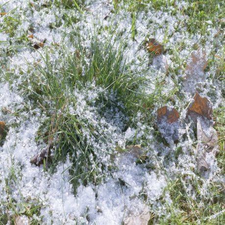 winter-lawn_900x900.jpg